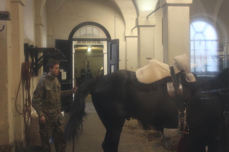 postlondonhorses (113)