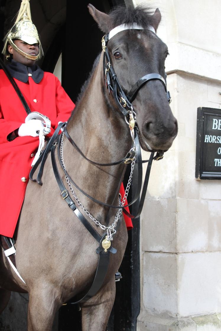 postlondonhorses (57)