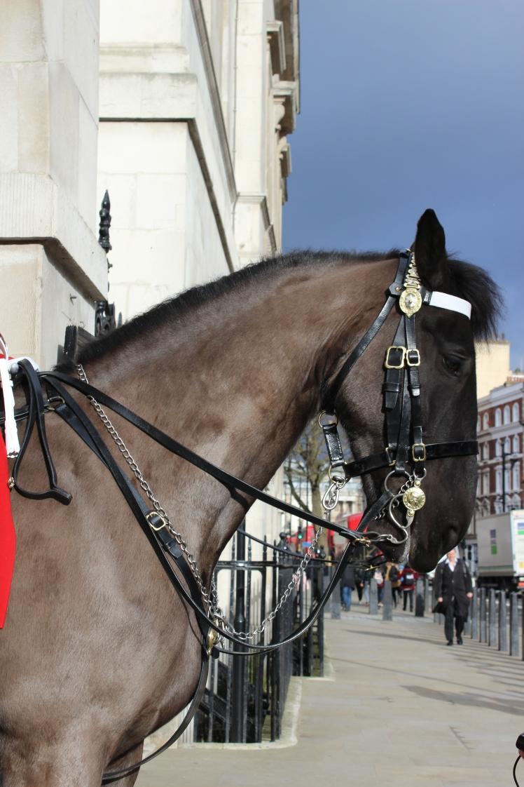 postlondonhorses (60)