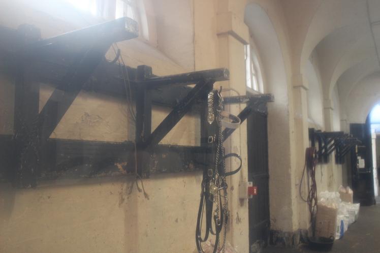 postlondonhorses (70)