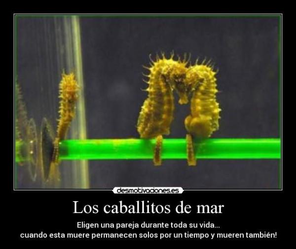 caballito_de_mar_curioso